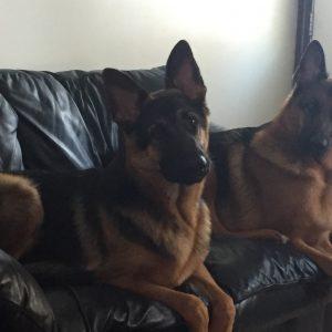 Koda and Luther
